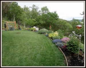 Grey-Wolf-Garden2