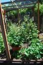 B - Garden-0016