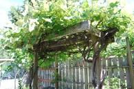 B - Garden-0018