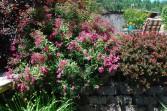 E - Garden-0015